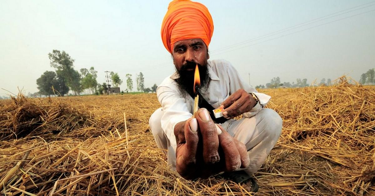 Green Plates from Paddy Stubble: IIT-D Innovation Fights Pollution While Making Farmers Richer!