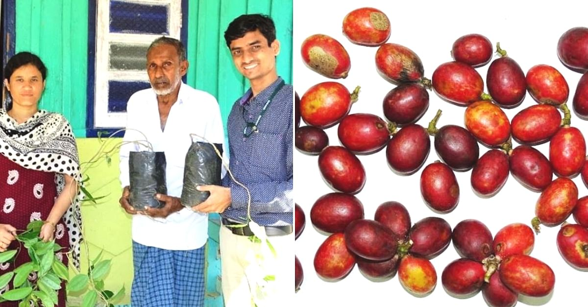 Indian Scientists Create Natural & Nutritious Food Dye From Wild Blood Fruit!