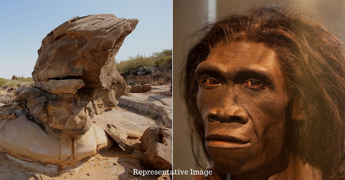 11 Million-YO Ape Fossil Discovered in Gujarat: Here Is Why It's a Momentous Find!