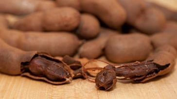 IIT Roorkee investigates tamarind seeds, discovers potential cure for chikungunya