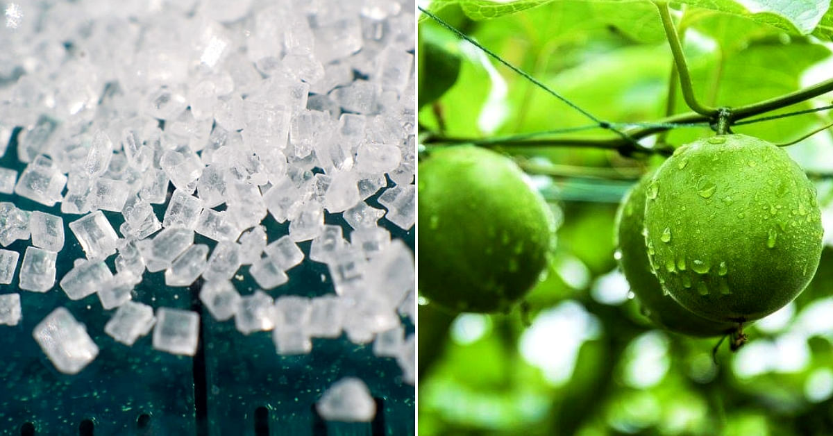 Low on Calories & 300 Times Sweeter Than Sugar, 'Monk Fruit' Grown in Himachal by Scientists!