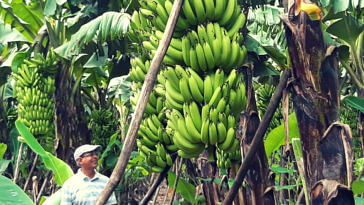 Exclusive: UP's Award-Winning Banana King Earns 48 Lakh/Year, Becomes Idol For Farmers!