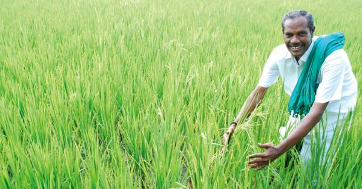 Tribute: 'Nel' Jayaraman, The Crusader Who Revived 170+ Native Paddy Varieties!