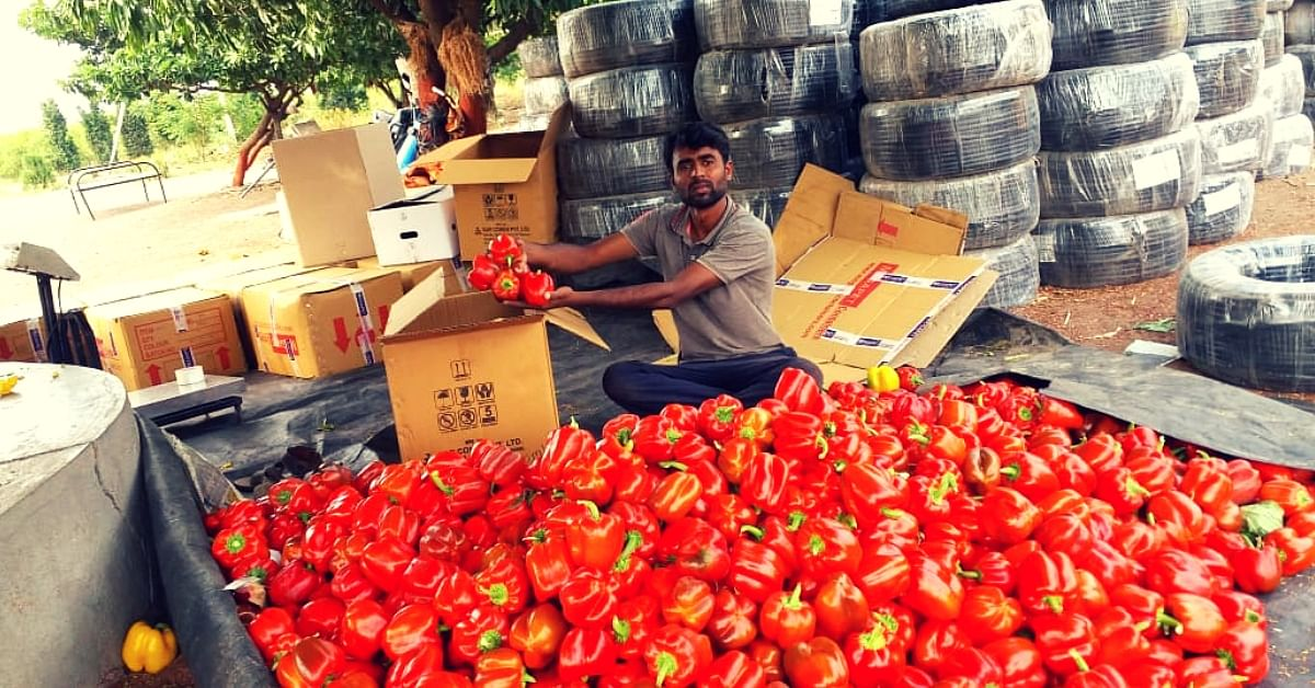 Unemployed Pune Man Turns To Farming, Earns Rs 13 Lakh Growing Capsicum!