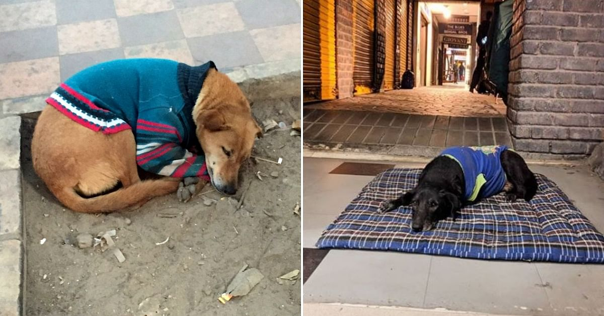 Delhi Gives Sweaters To Stray Dogs To Help Them Stay Warm This Winter