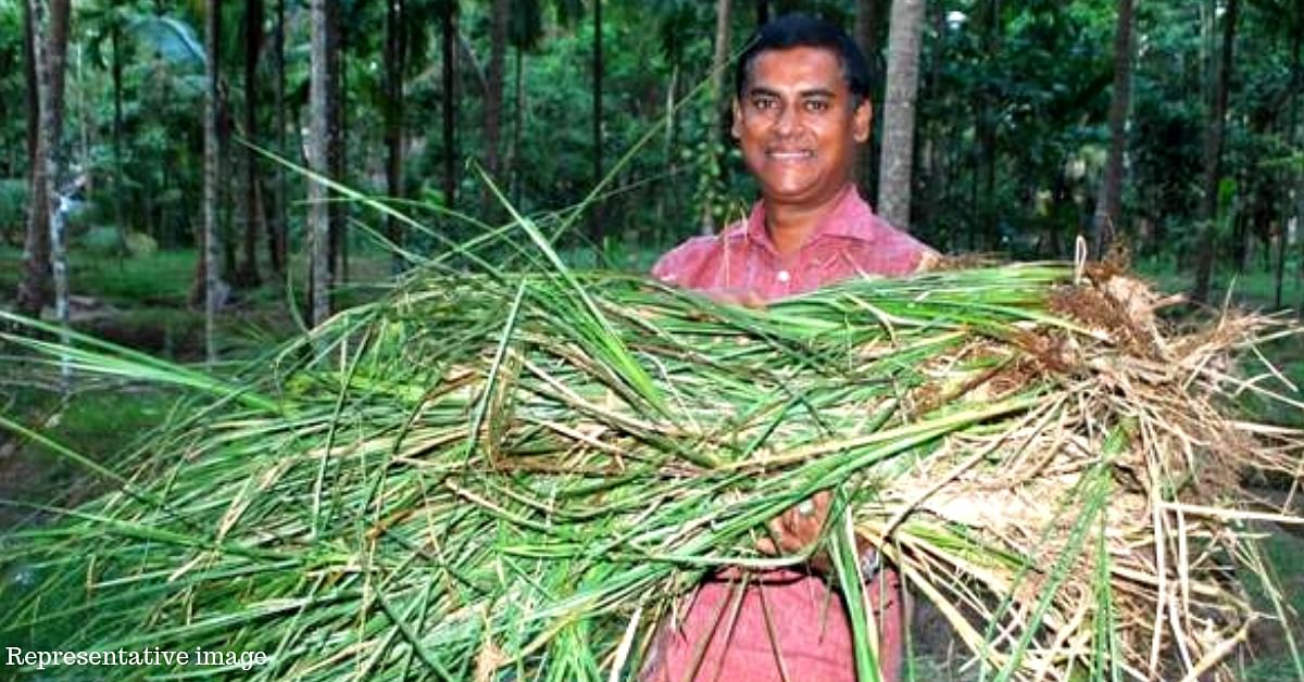 Traditional 'Wonder Grass' Helps TN Farmer Earn Rs 1.5 Lakh Profit per Acre of Land!