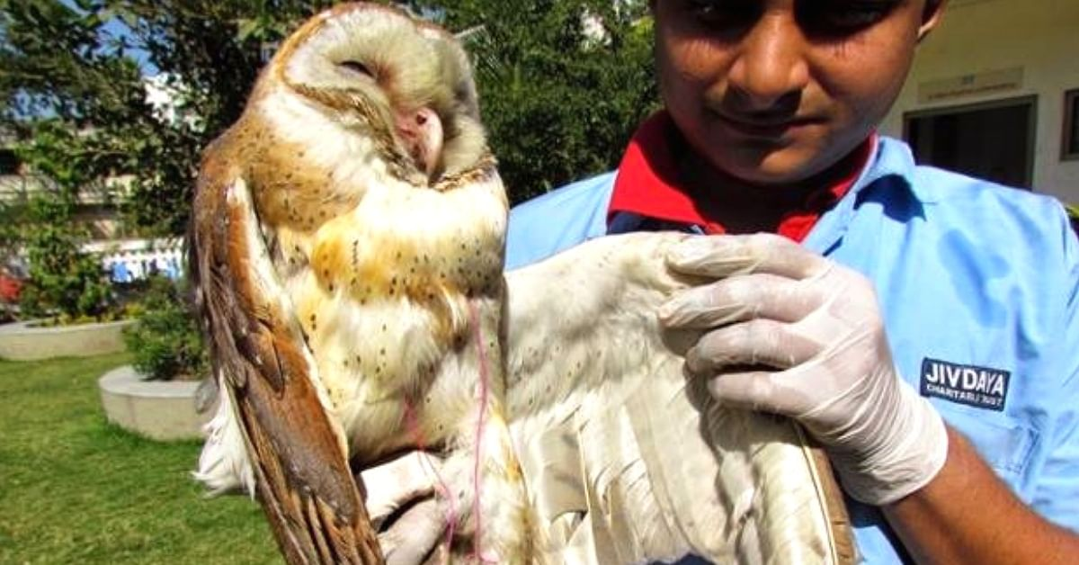 Amazing! Here's How Thousands From Ahmedabad Came Together To Rescue 4506 Birds