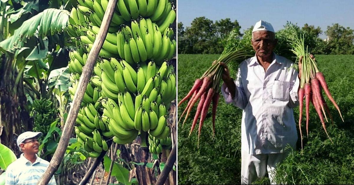 Kisan Chachi to Banana King: Meet 10 Amazing Farmers Who Won the Padma Shri This Year!