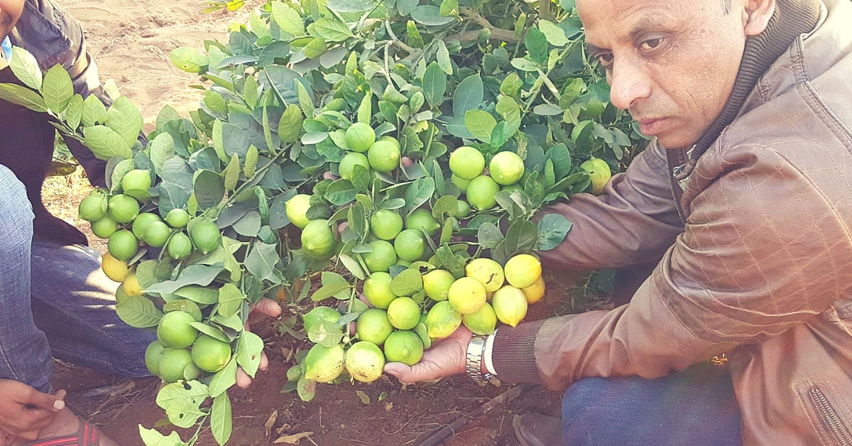 Meet Three Farmers Who Prove Lemons in Life Can Earn Lakhs