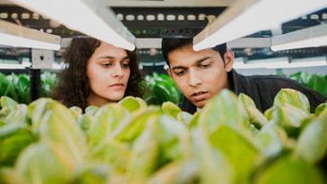 Seeking fresh produce, Mumbai duo quits jobs to grow over 1,000 plants soil-less! (1)
