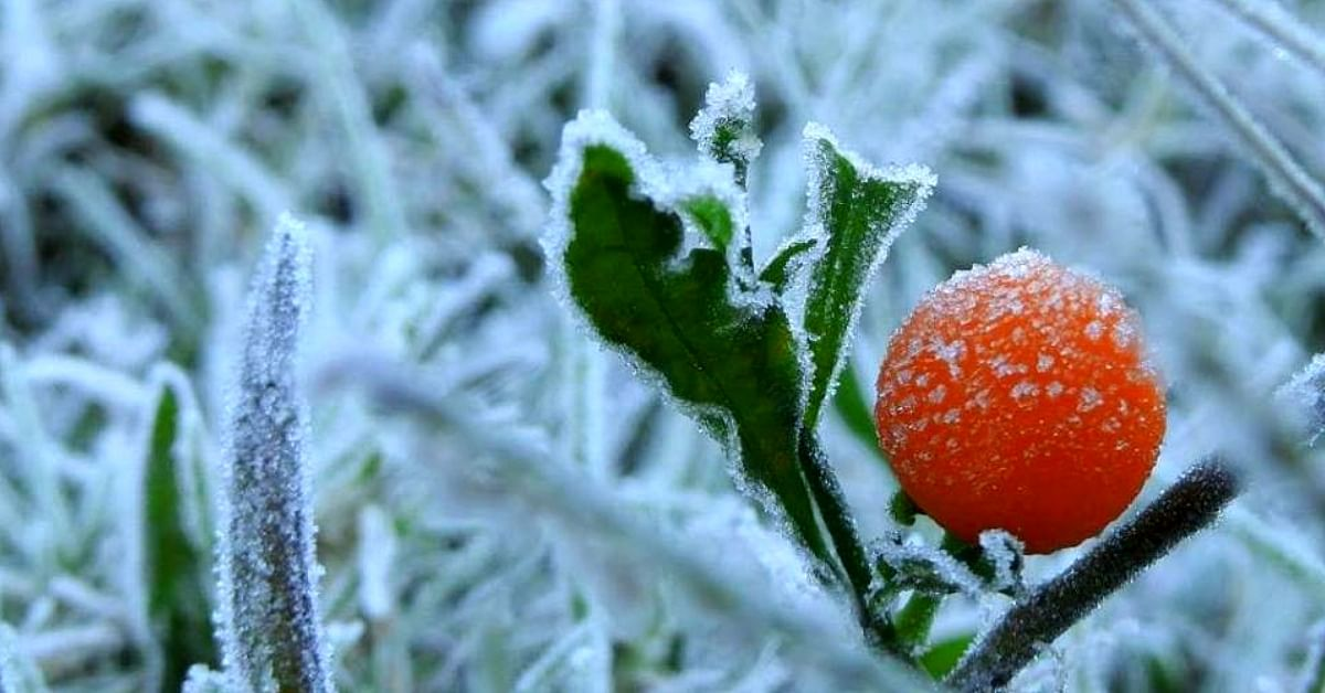 Frost in Munnar & Chilly Nights in Chennai: Why South India Is so Cold Right Now