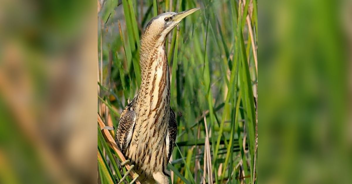 Real Impact: Clean up Drive Helps Rare Bird Return to Mumbai After 80 Years!