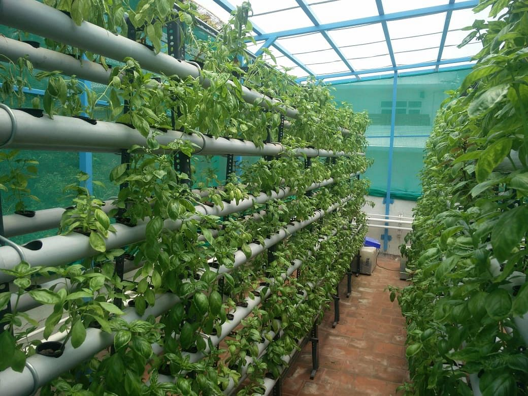 Hydroponics: Chennai Man Grows 6,000 Plants in 80 Sq Ft Space!