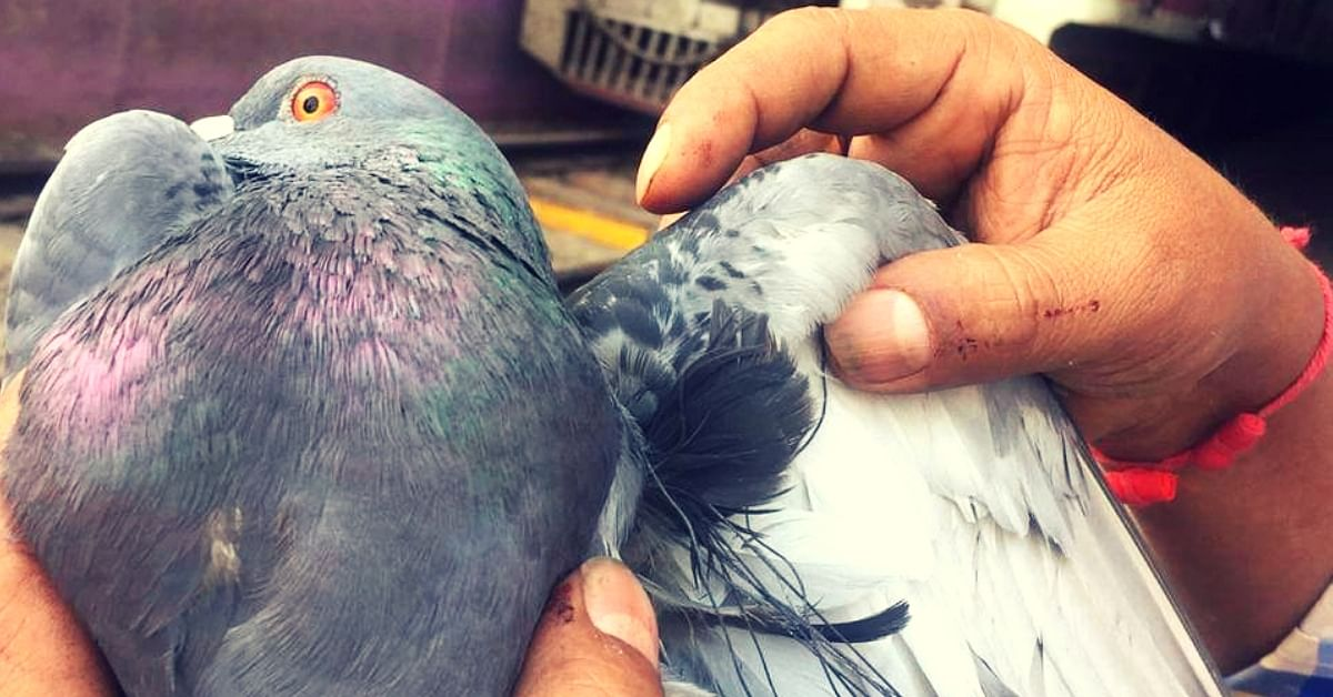 Positive Moment: Mumbai's Lifeline Stops for Five Minutes to Save a Pigeon!