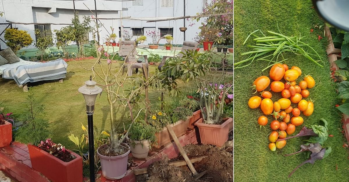70-YO Indore Man Sets Green Example, Grows His Own Food In His Terrace Garden!