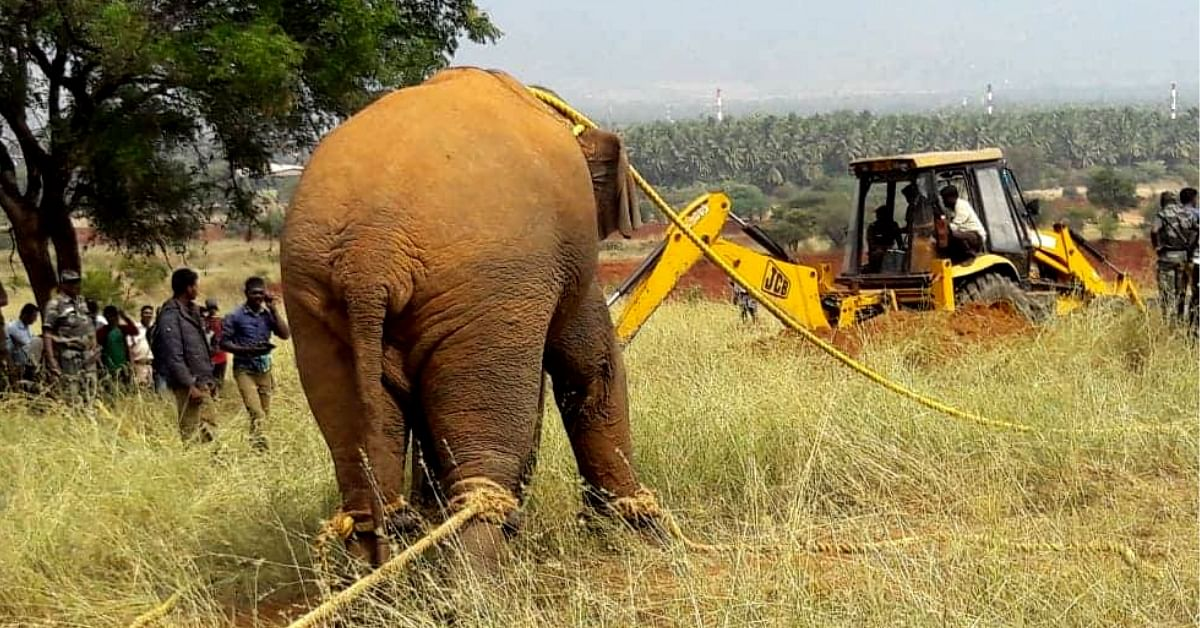 TN Villagers, Activists Win Freedom for Wild Elephant; Help Him Journey Back Home