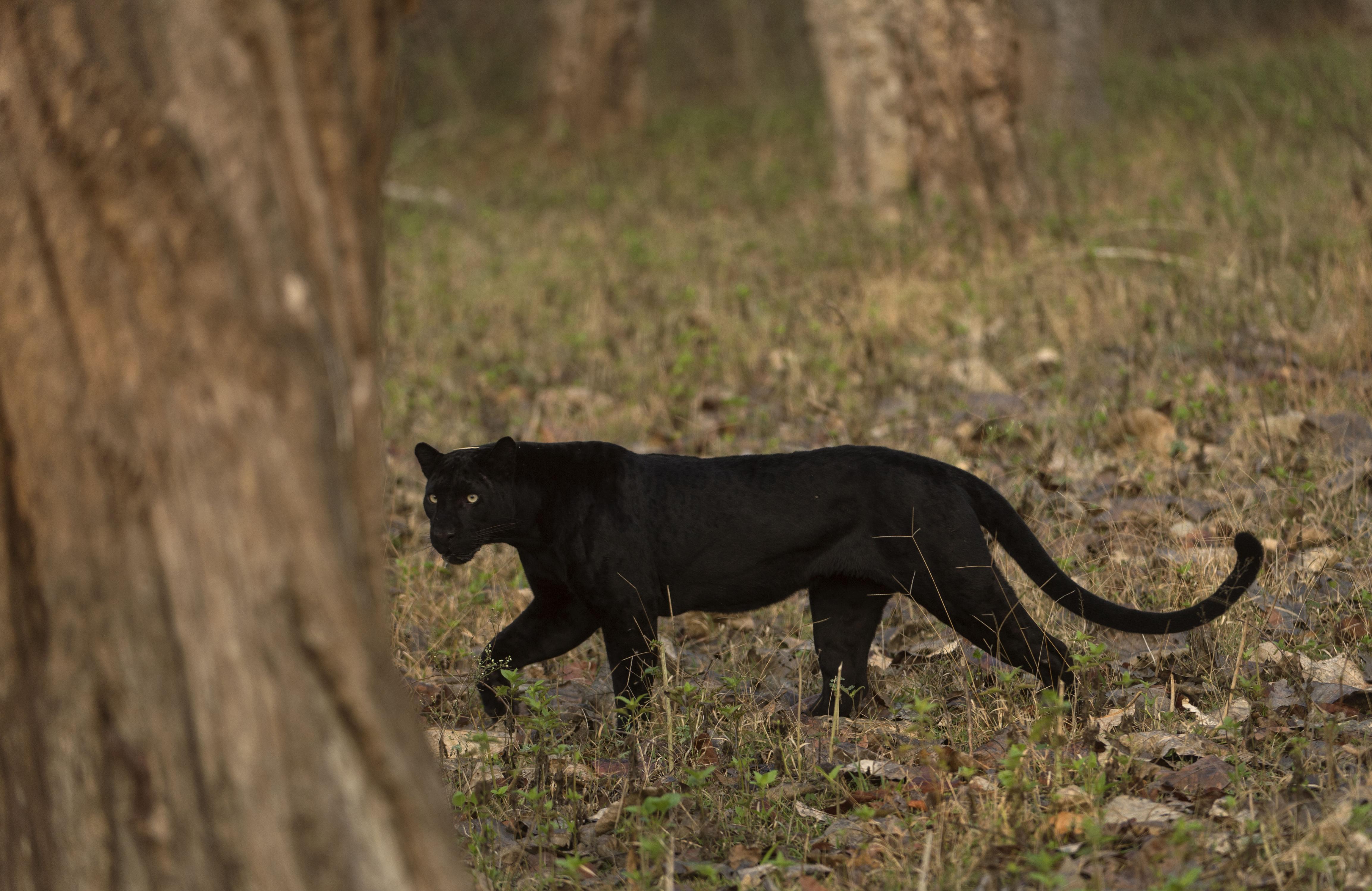 Still from the Wild Karnataka documentary. (Source: Kalyan Varma)