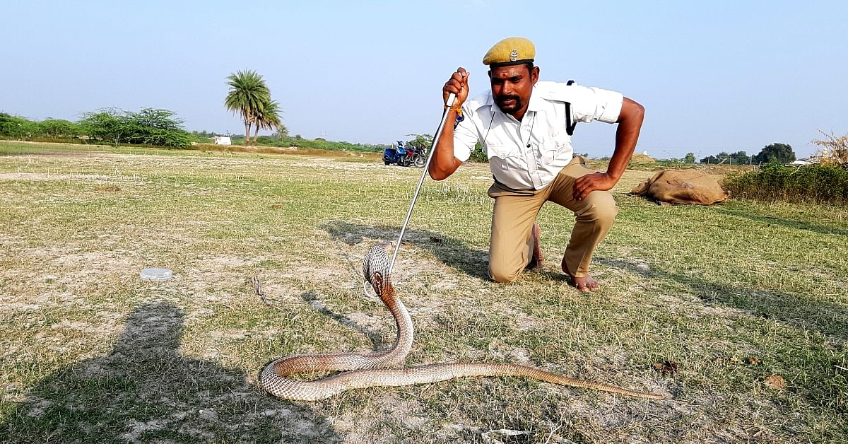 A Local Conservation Hero, Amazing Telangana Cop Has Rescued 1300 Snakes in 5 Years