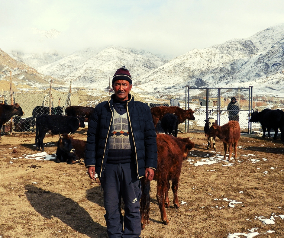Inspiring! Ladakh Mason Quits Job to Save 70+ Abandoned Animals With His Own Funds