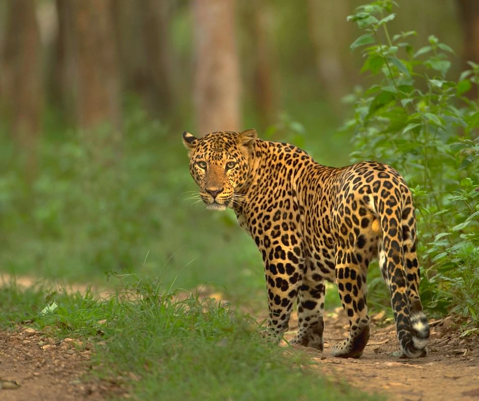 Exclusive: The Story Behind Wild Karnataka, India's First Blue Chip Natural History Film!