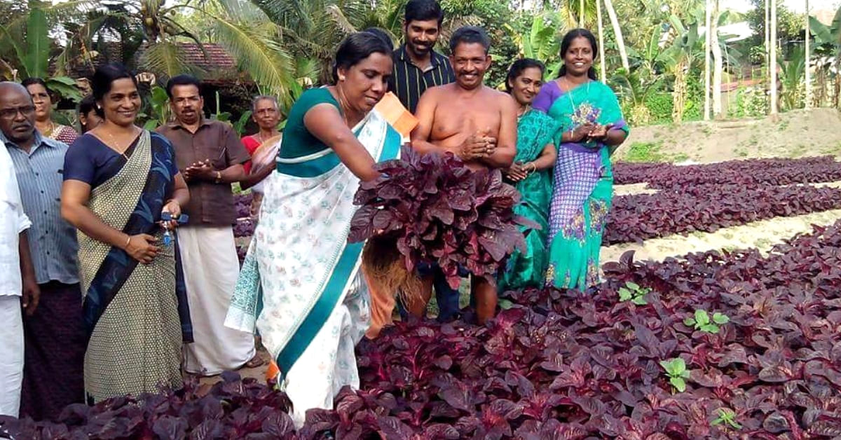 What India Can Learn from Kerala's Only Vegetable-Sufficient Panchayat, Kanjikuzhi
