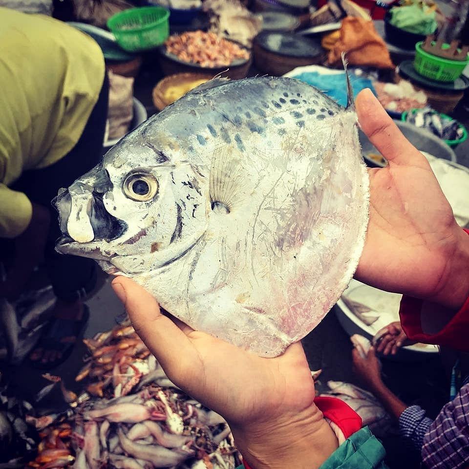Moon Fish (Source: InSeason Fish)