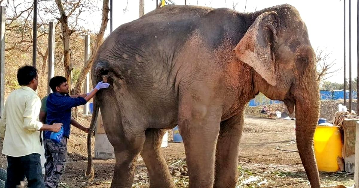 Abused for Years, Now Rescued: This Temple Elephant's Story Will Move You to Tears