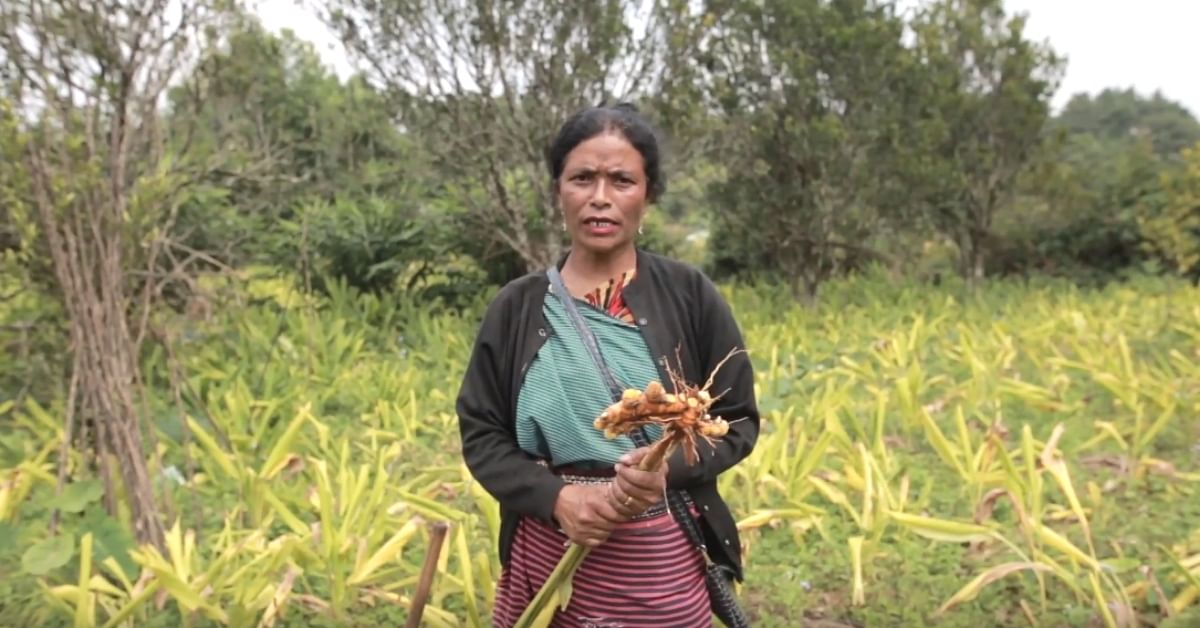 Meghalaya Teacher Grows Unique Turmeric, Helps 900+ Farmers Triple Their Income!