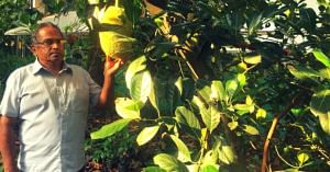 Working for 35 Years, Ex-Banker Grows Lush 2 Acre Forest in the Middle of Kochi! (1)