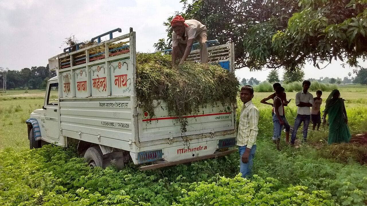 At the beginning of mint nursery sowing in Marachhi village, Nabiganj (Block), Siwan. (Source: DeHaat)