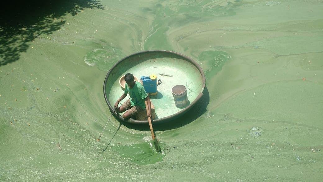 Fisherman spraying EM solution into the lake. (Source: MAPSAS)