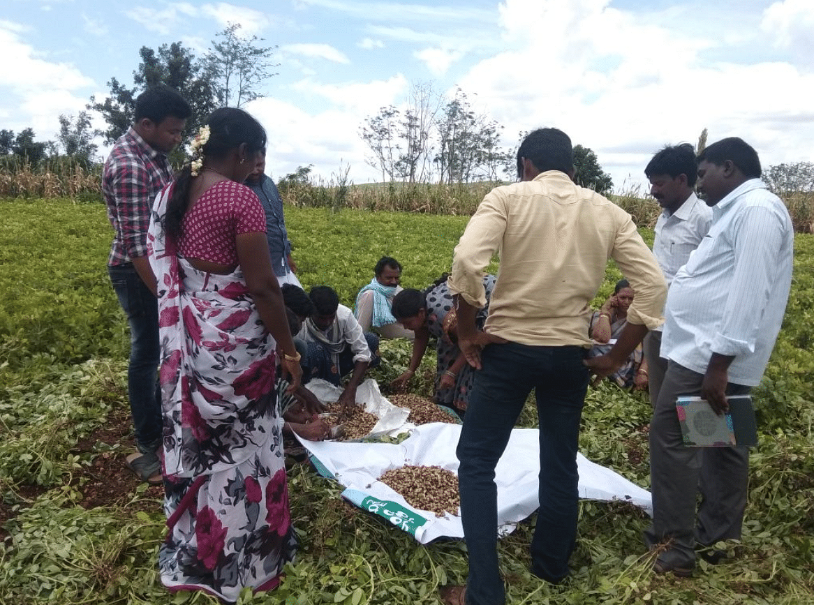 Rattled by Farmer Suicides,Health Issues, Telangana Village Goes Organic