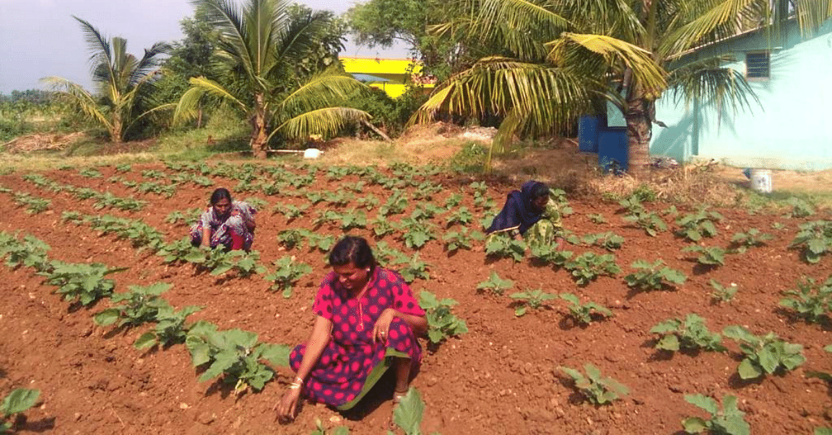 Trans People in This Karnataka Village Are Farming Their Way Out of Exploitation