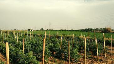 Gurugram farmer vegetable wastage innovation Krishi Ratna india