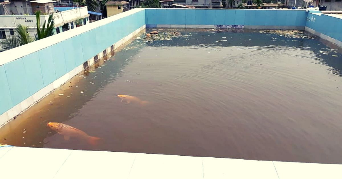 Assam Man Farms Fish in Rooftop Pond, Turns Kitchen Waste into Bio-Pesticides!