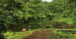 organic-farming-mumbai-vrindavan-farm