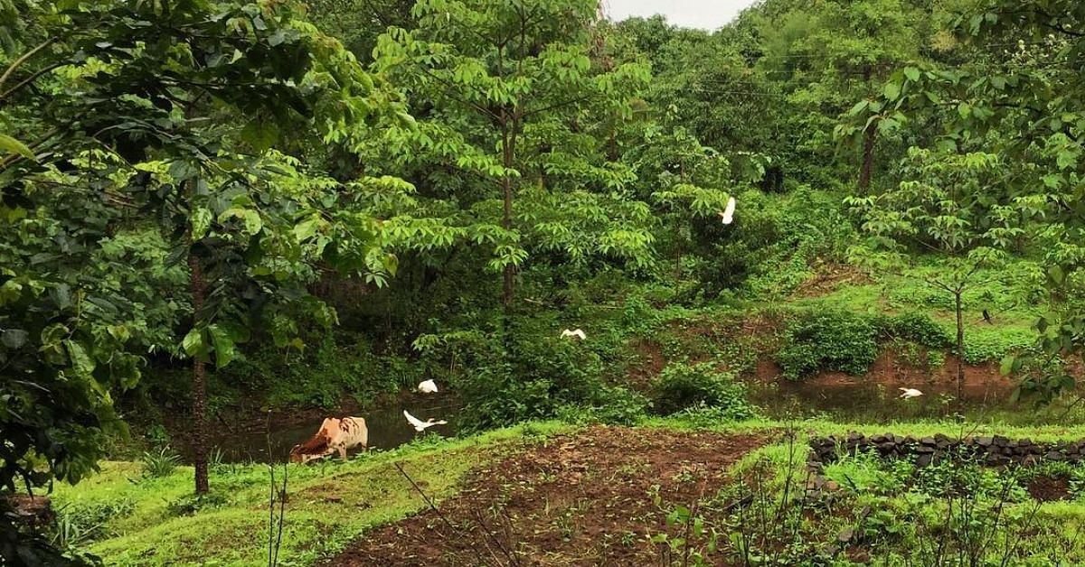 Woman Quits Cushy US Job to Go Organic, Transforms Farm into 10-Acre Food Forest!