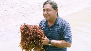 tamil nadu-seaweed-farming-fisherfolk