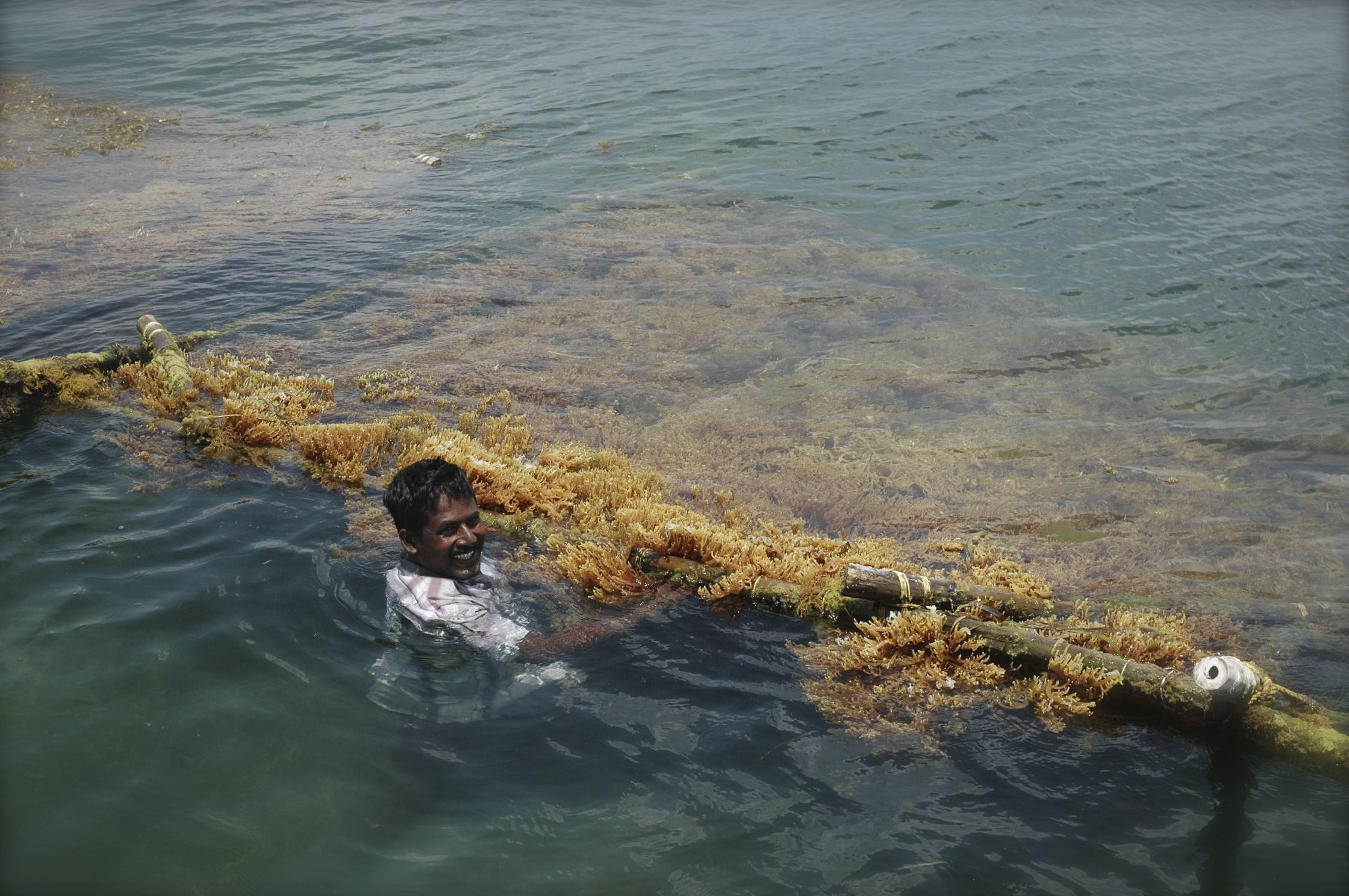 Eco-Friendly Seaweed Farms Are Boosting Incomes of 600 TN Fisherfolk!