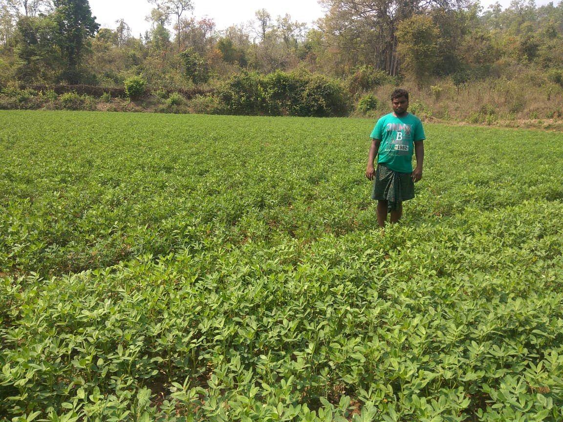 At Hitasara Village, Nakideul Block, Sambalpur district. (Source: Samagra)