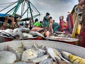 Fisherwomen sorting through diverse fish catch at Junglighat in Andamans. (Source: InSeason Fish)