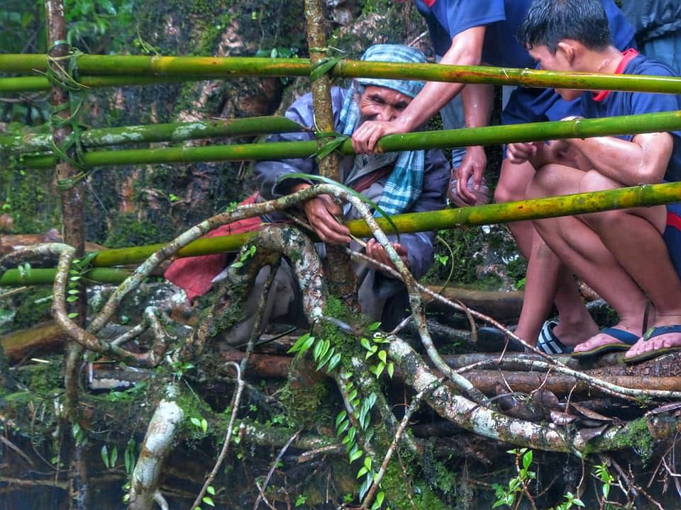 An elderly citizen assisting with the maintenance of living root bridge, (Source: Facebook/Living Bridge Foundation)