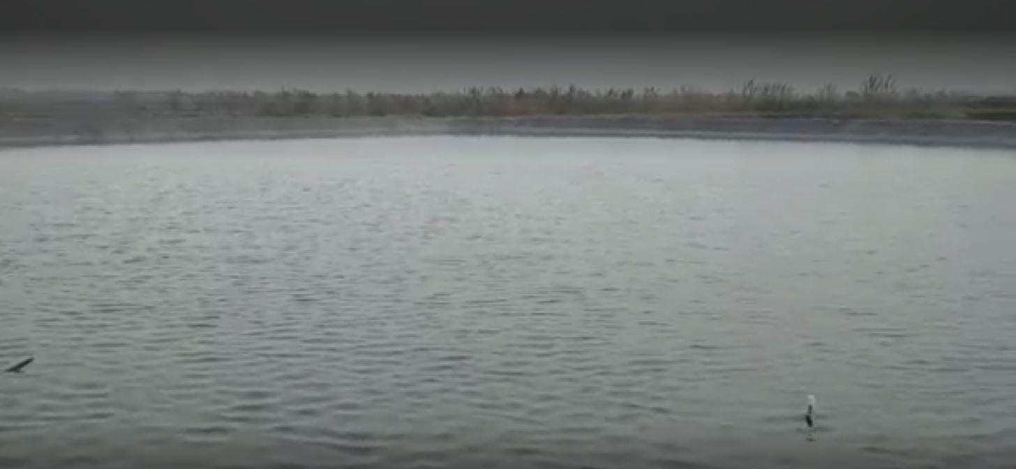 Gurugram Ex-Serviceman Turns Barren Land Into Shrimp Farms
