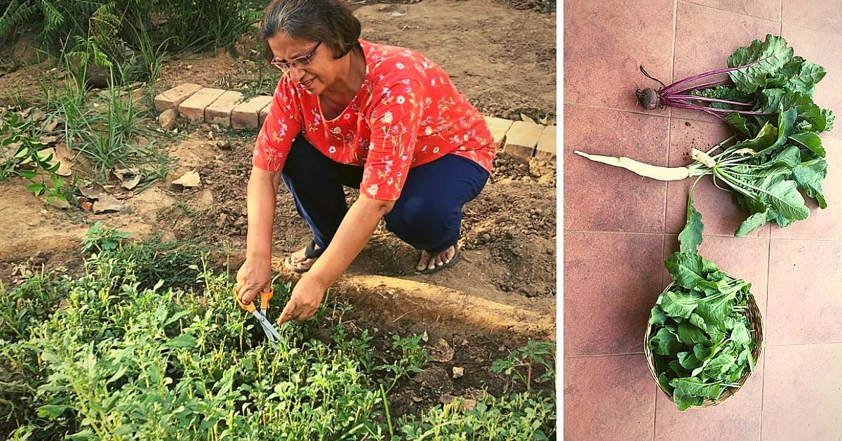 Zero Waste to Organic Food: Ahmedabad Lady's Toxin-Free Home Will Inspire You!