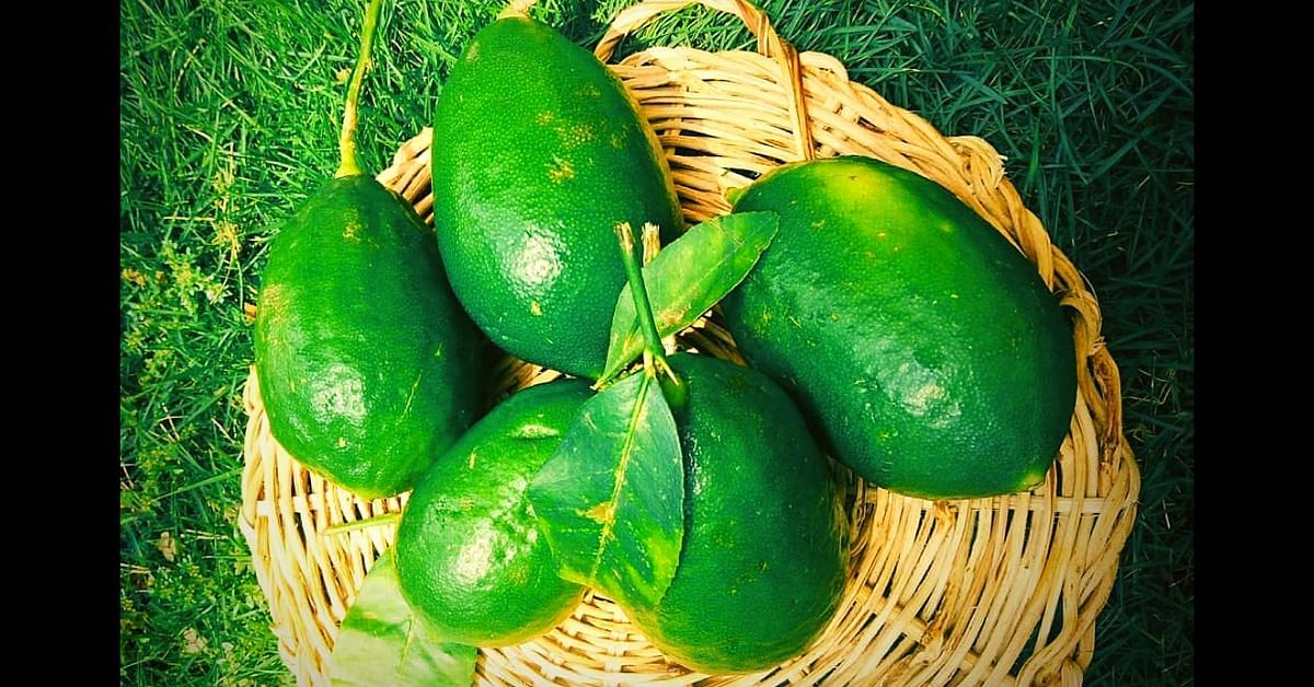 King of Lemons: How the Gondhoraj Lebu Literally Remains True to Its Roots!