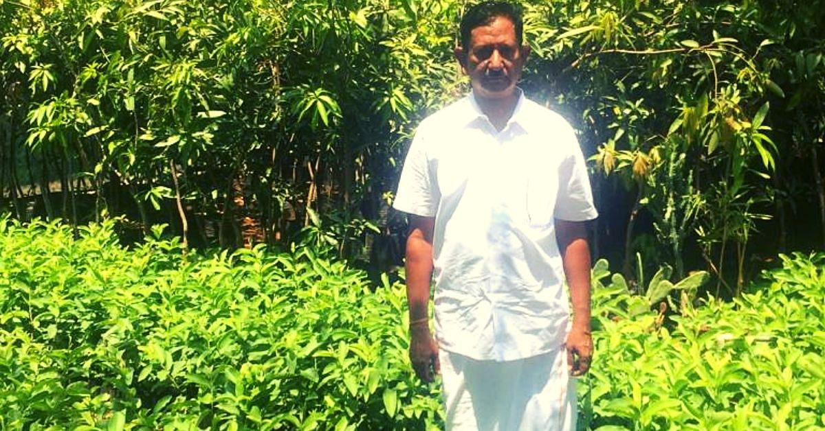63-YO TN Farmer Brings Back Rare Mangoes That Were On The Verge of Extinction!