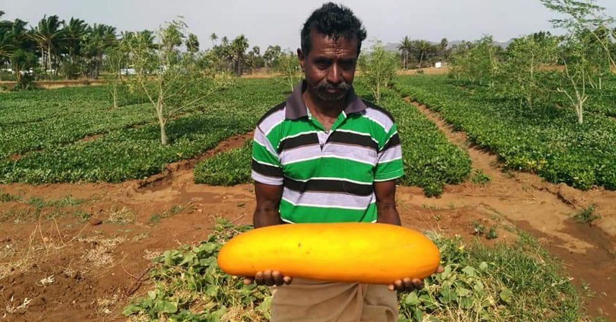 Engineering Dropout to Organic Farmer Growing 300+ Native Veggies: TN Man's Inspiring Story!