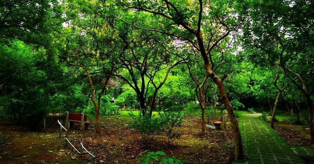 5% to 95% Green Cover: How a Delhi Park Was Turned Into a Lush Forest, Boosting Water Table & Air Quality!