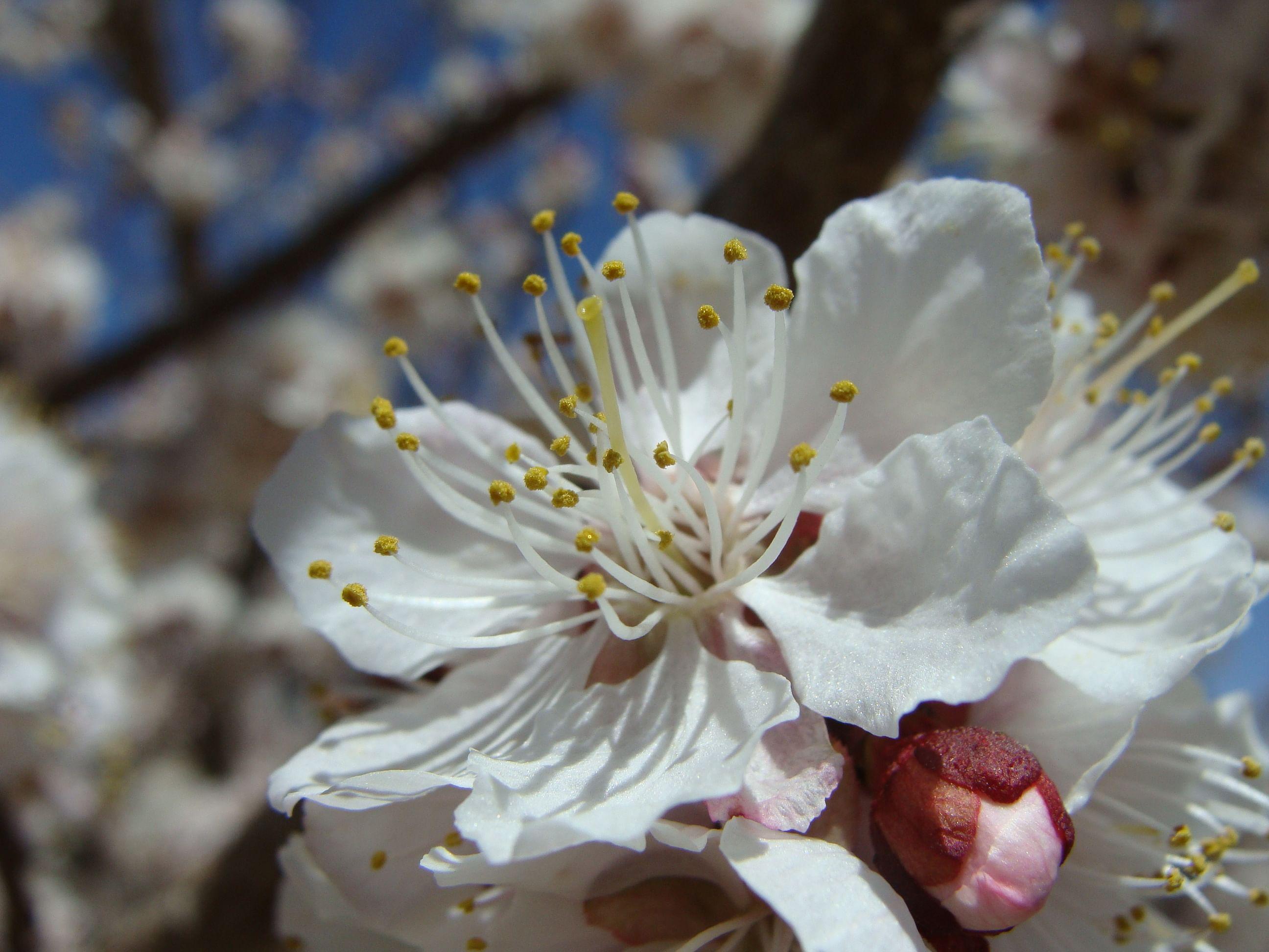 In Bloom (Source: Dr Tsering Stobdan)