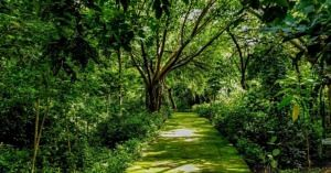 Delhi park airshed how to grow mini forest city india